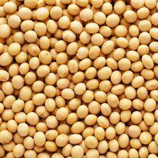 kacang kedelai khasiat